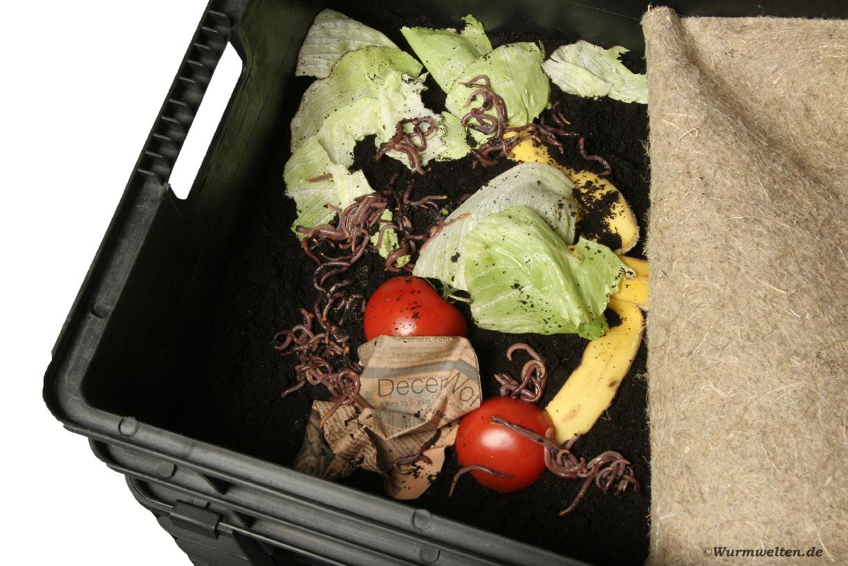 Wurm Cafe mit Kompostwürmern