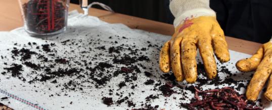 Wie ernte ich Kompostwürmer aus meiner Wurmfarm?