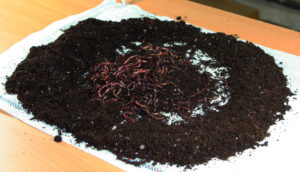 Kompostwurm Lichternte in Haufen