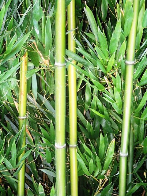 Bambus Richtig Einpflanzen Wurmwelten De
