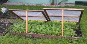 Frühbeet Garten
