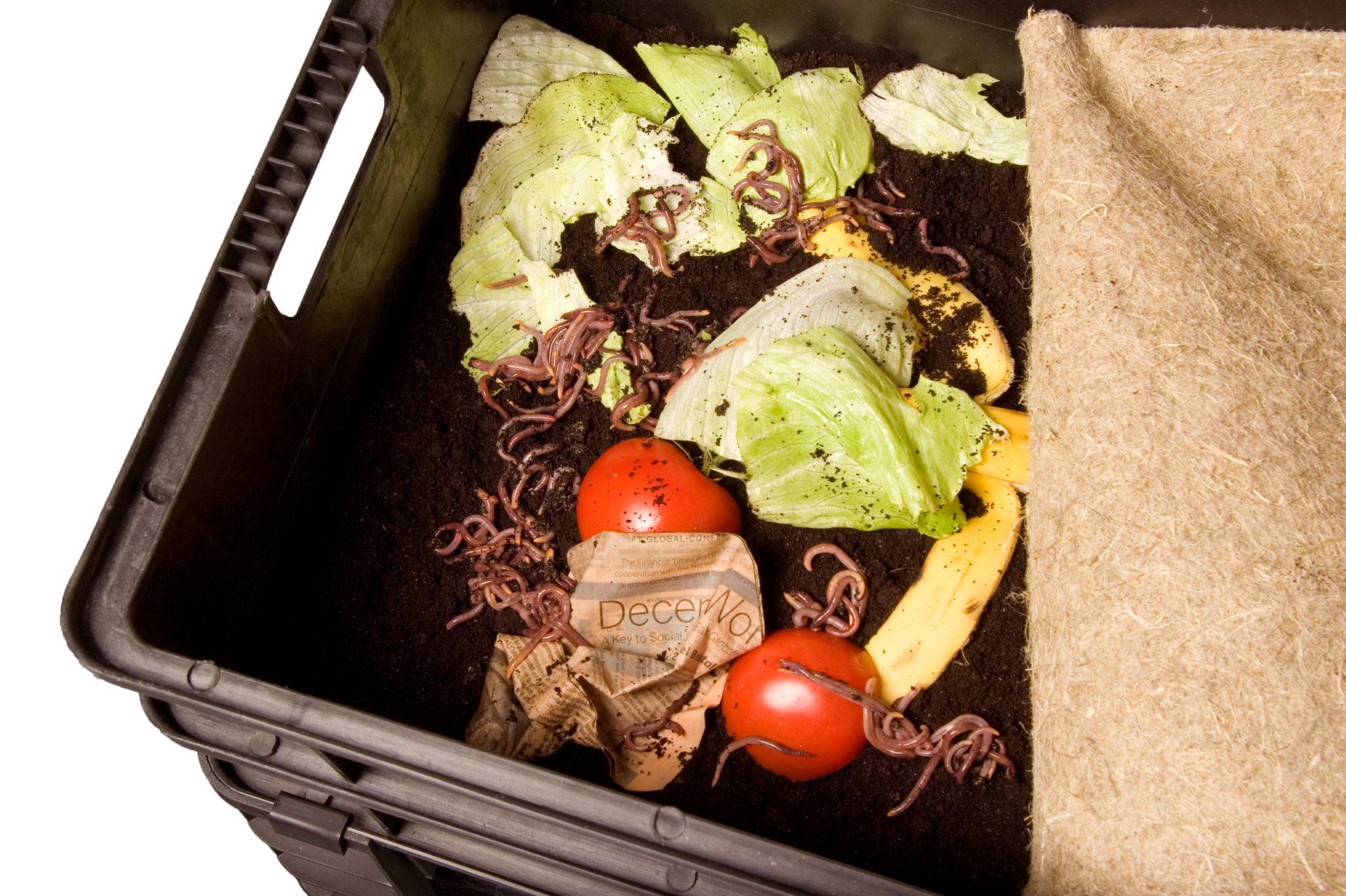 Wurmkiste mit Kompostwuermern