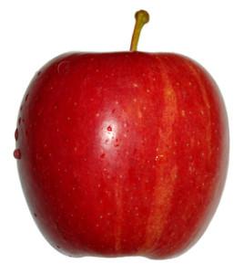 Apfel einpflanzen