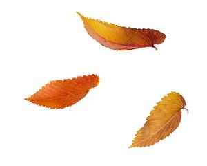 Laub Blätter
