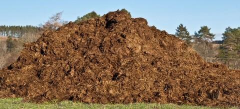 Kompostwürmer selber züchten um Pferdemist zu entsorgen