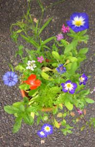 Seedballs Blume