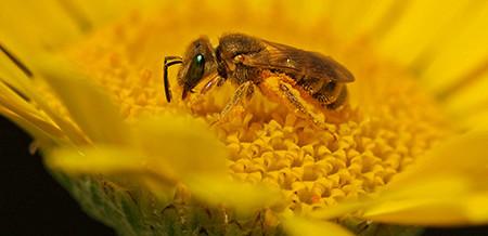 Wildbienen schützen ist einfach