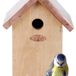 Nistkästen & Vogelhäuser Anleitungen