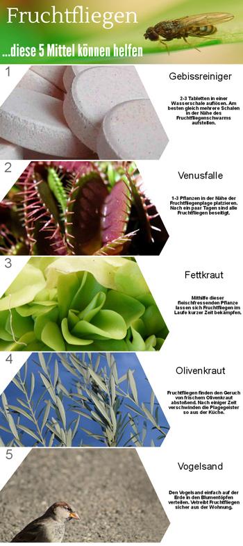 ruchtfliegen-Bekaempfung-Infografik
