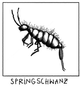 springschwanz