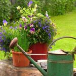 5 Tipps zum richtigen Gießen