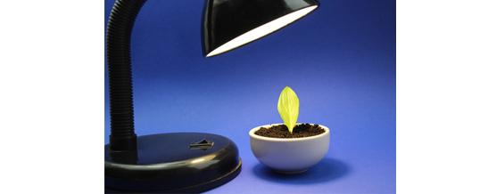 Warum Pflanzenlampen nutzen?