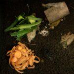 7 Probleme beim Betrieb einer Wurmkiste