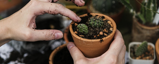 Auch ohne Garten und Balkon Pflanzen züchten