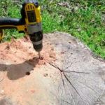 Baumstümpfe mit Kompost und Co. entfernen