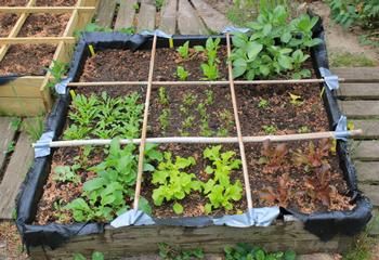 Garten Quadratmeter