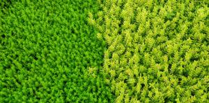 Grassorten