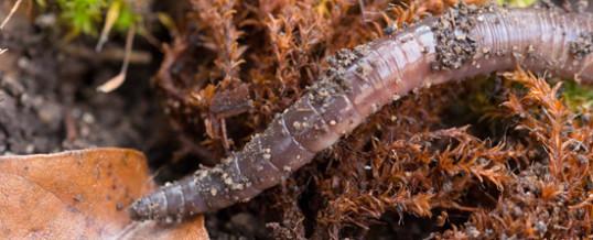 So wichtig sind die Regenwürmer für unseren Boden