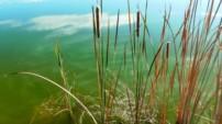 Einen Naturteich anlegen – Ist eine Teichpumpe notwendig?