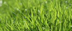 Grasschnitt