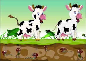 Hat der Bauer Mehr Kühe oder Regenwürmer?