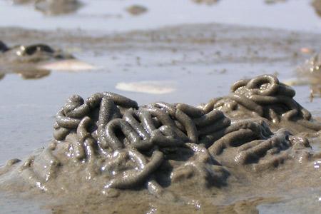 Wattwurmhaufen im Sand
